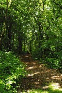 Balade dans le bois de Saint Alouarn à Guengat